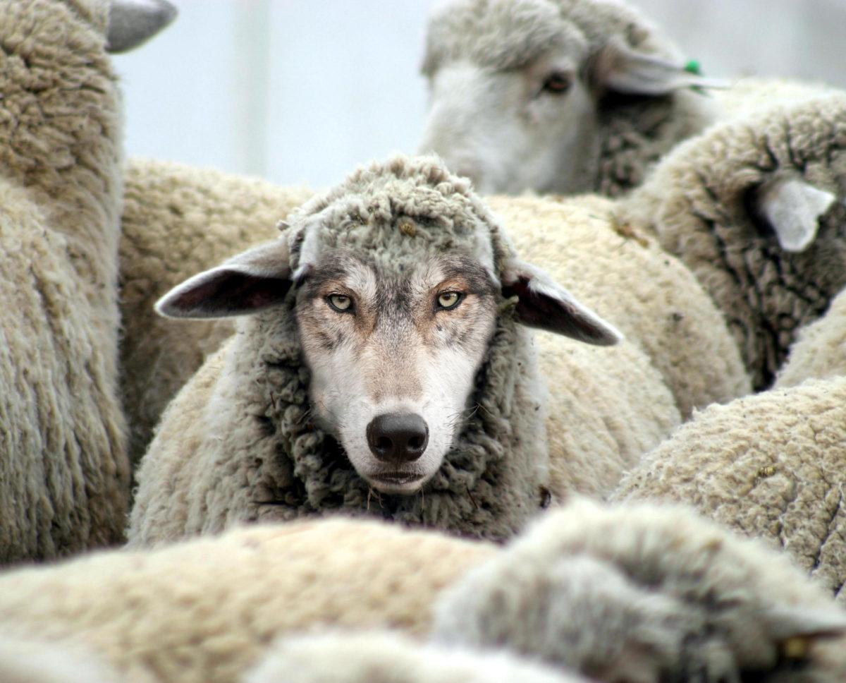 False Churches, a Convenience for the Soft Christian